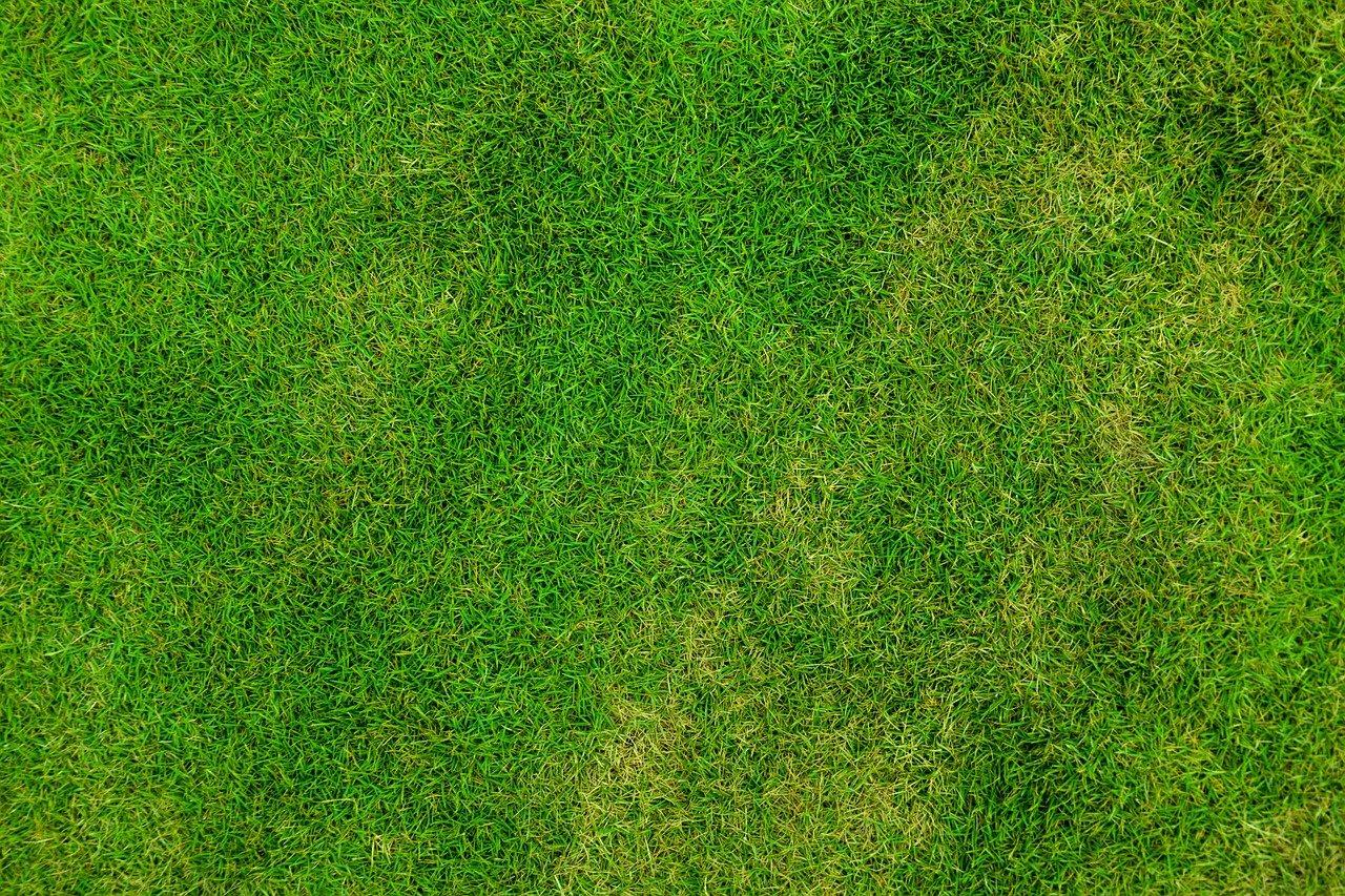 grass, lawn, backdrop