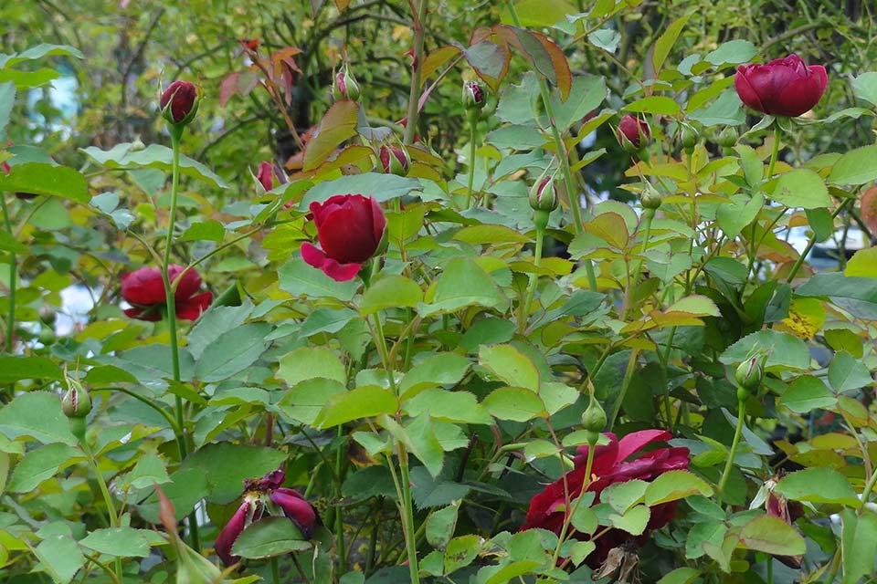 jardinerie (10)