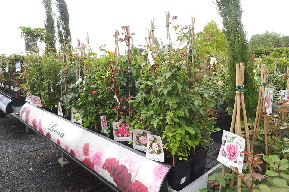 jardinerie (11)