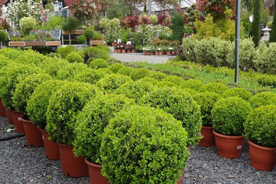 jardinerie (16)