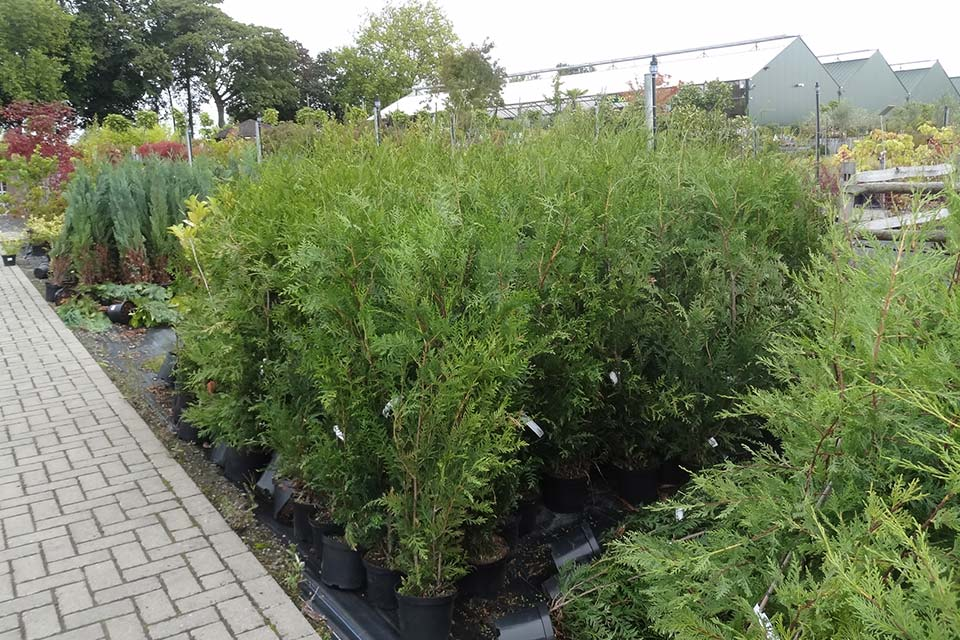 jardinerie (4)