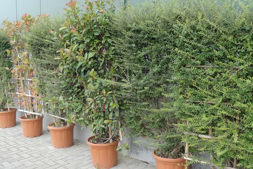 jardinerie (5)