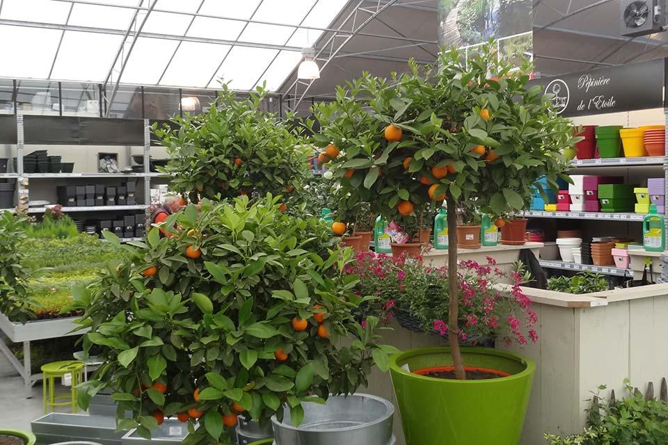 jardinerie (6)