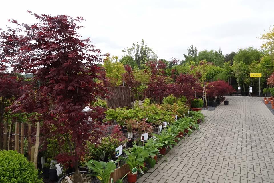 jardinerie (9)