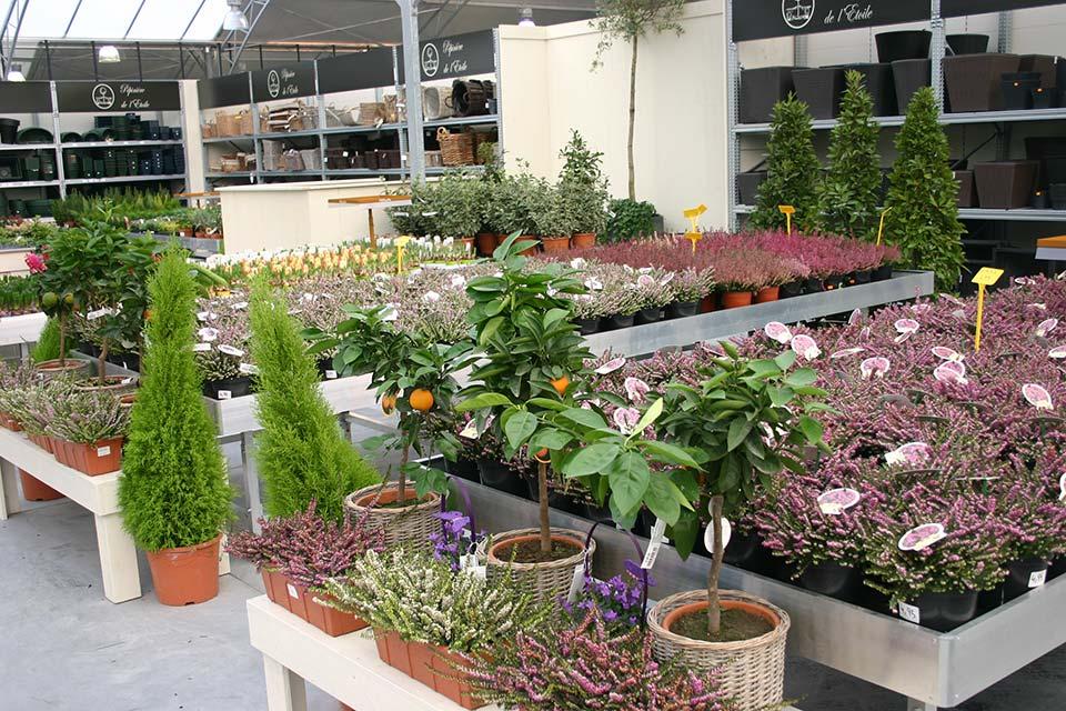 plantes_annuelles_1