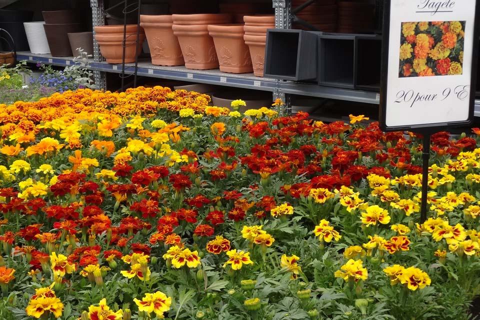 plantes_annuelles_10