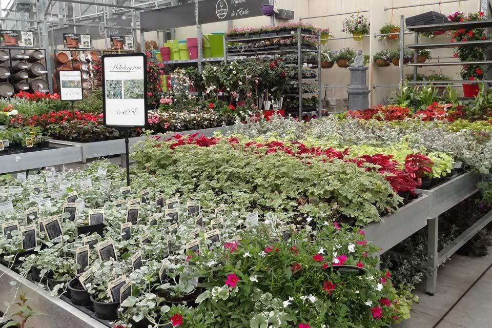 plantes_annuelles_11