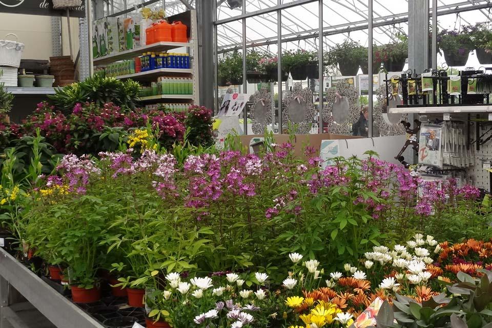 plantes_annuelles_12