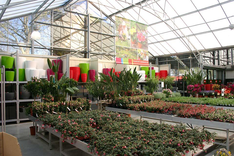 plantes_annuelles_4