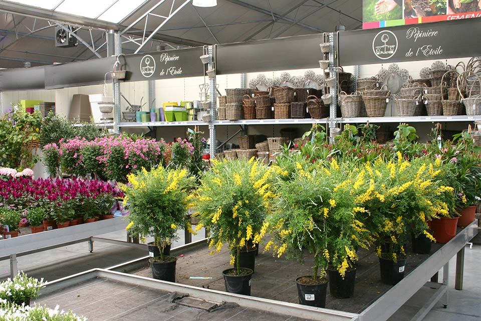 plantes_annuelles_5