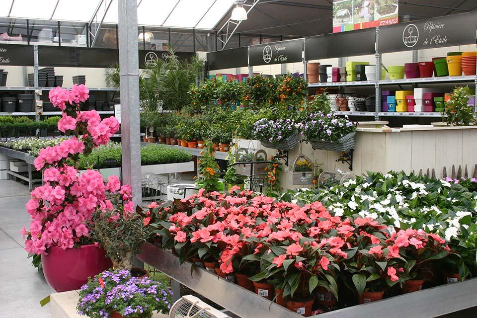 plantes_annuelles_6