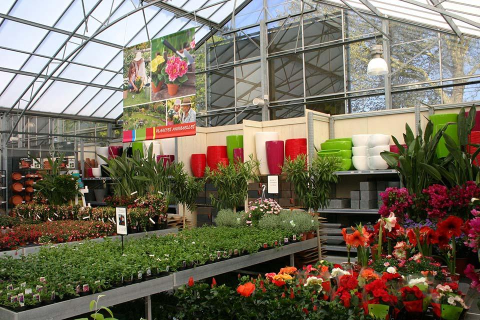 plantes_annuelles_7