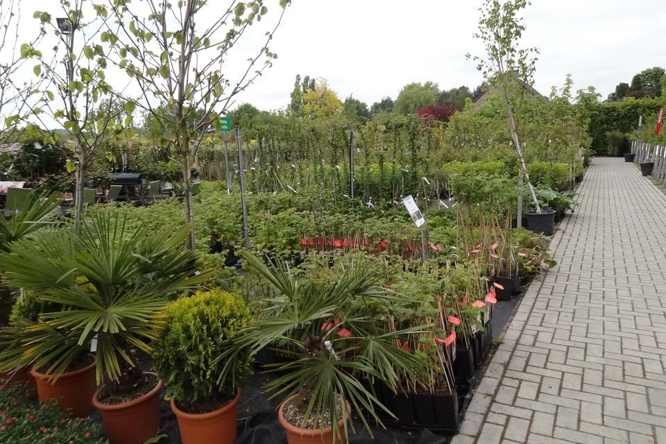 plantes_vivaces_1