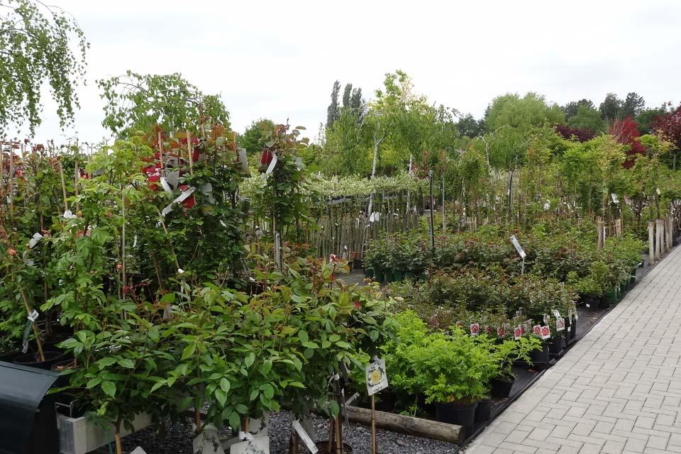 plantes_vivaces_2