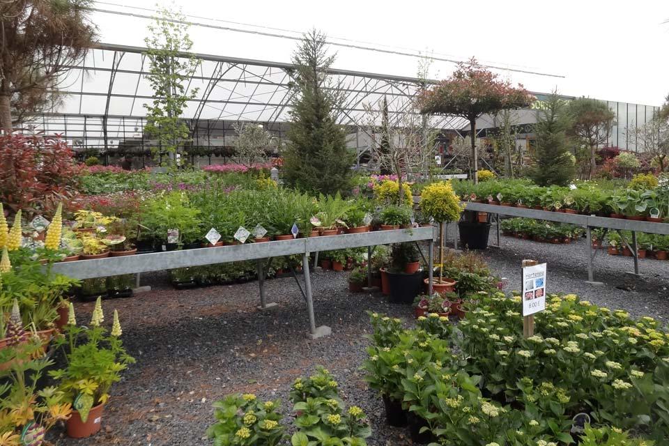 plantes_vivaces_3