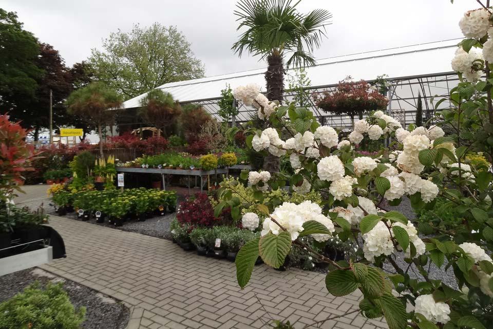 plantes_vivaces_4
